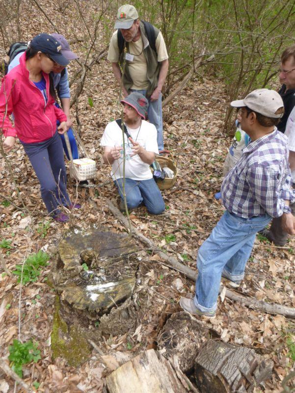 Looking at Armillaria sp. (Honey mushroom ) rhizomorphs. Photo by Alexis Rzewski.