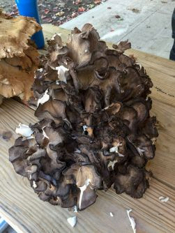 Hen of the woods. By Richard Jacob
