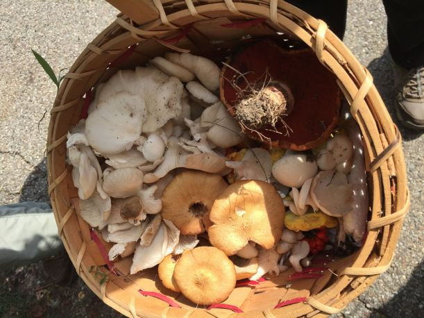 Mushroom collectors basket. By Richard Jacob