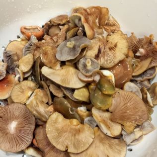 Washed and cleaned mushrooms for soup. By Richard Jacob