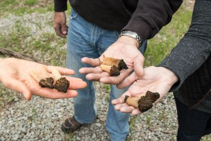A hand full of half free morels