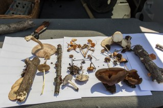 Some of the finds