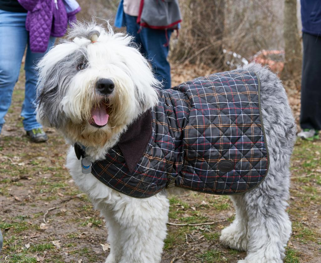 Happy Dog at Hartwood-Kris Murawski