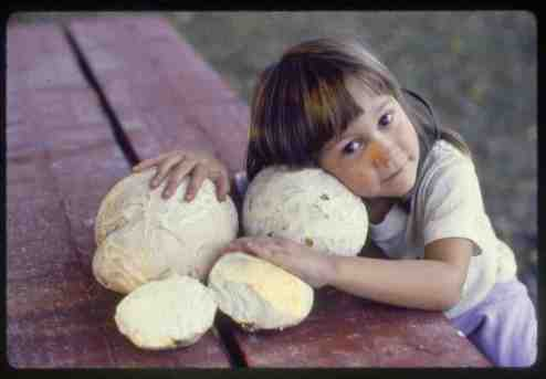 Jim Wasik giant-puffball-lily