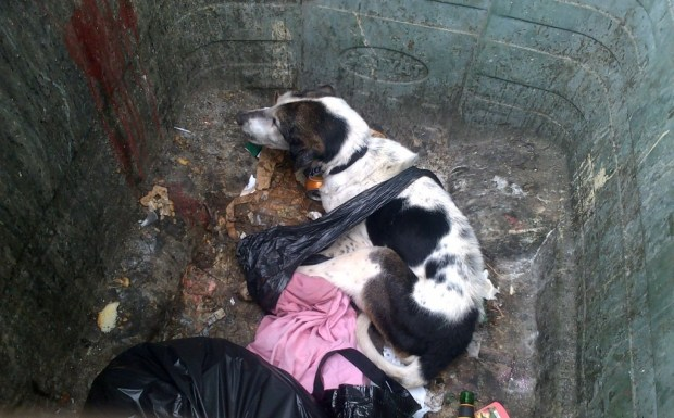 Image result for Dundee sisters to face animal cruelty trial after dog found in bin