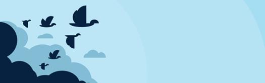 WordPress Migration Tools