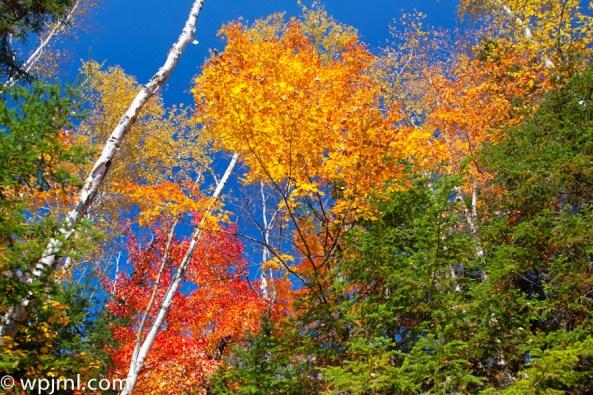 Ontario Fall 2011 - Kawarta Lakes