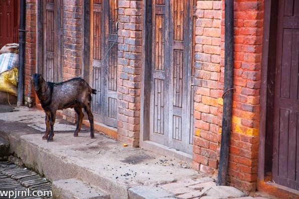 awaiting release - bhaktapur