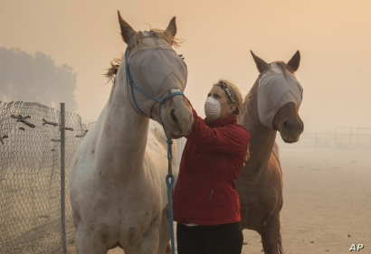 Volunteers help evacuate horses during the Easy Fire, Wednesday, Oct. 30, 2019, in Simi Valley, Calif.  A new wildfire erupted…
