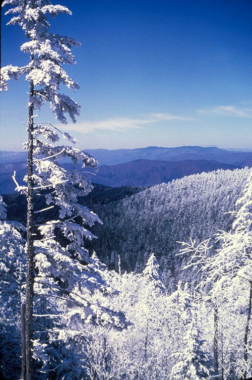A snowy scene at the Great Smoky Mountains National Park