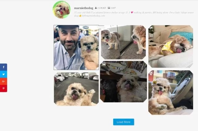 Screenshot Instagram Feed Lite Marnie the Dog