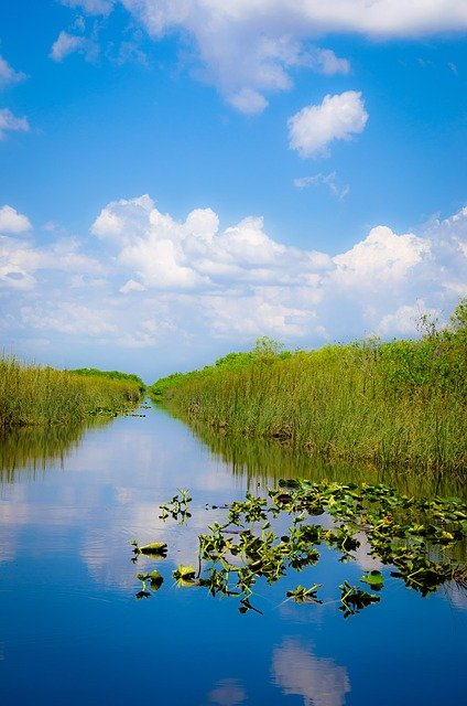 A beautiful view of the Everglades grass swamplands.