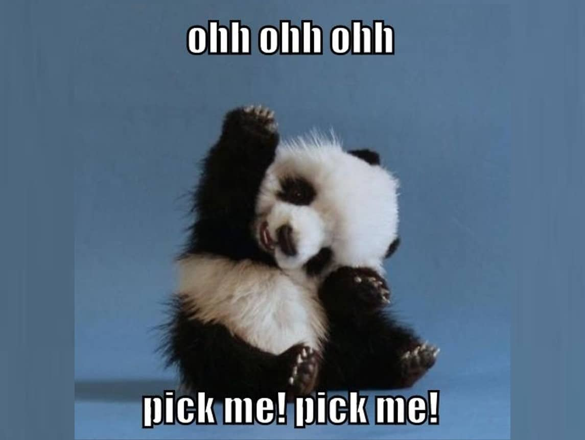 baby panda saying pick me