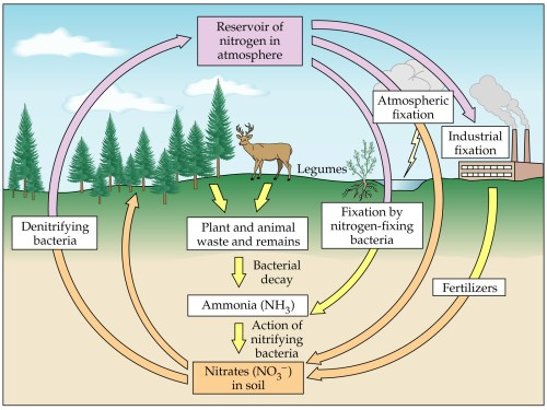 small resolution of nitrogen cycle image