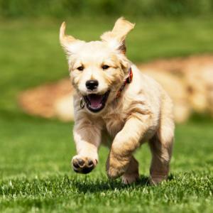 Dog analogy of How do I create a custom taxonomy in WordPress?