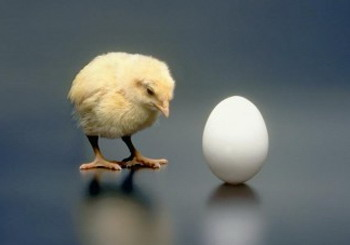 wordpress development chicken-egg problem
