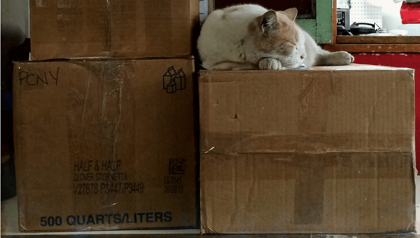 Kitty sleeping on a package next to other packages