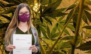 Brak kar za skręta i legalna uprawa w domu.  Projekty ustaw dot. marihuany w Sejmie