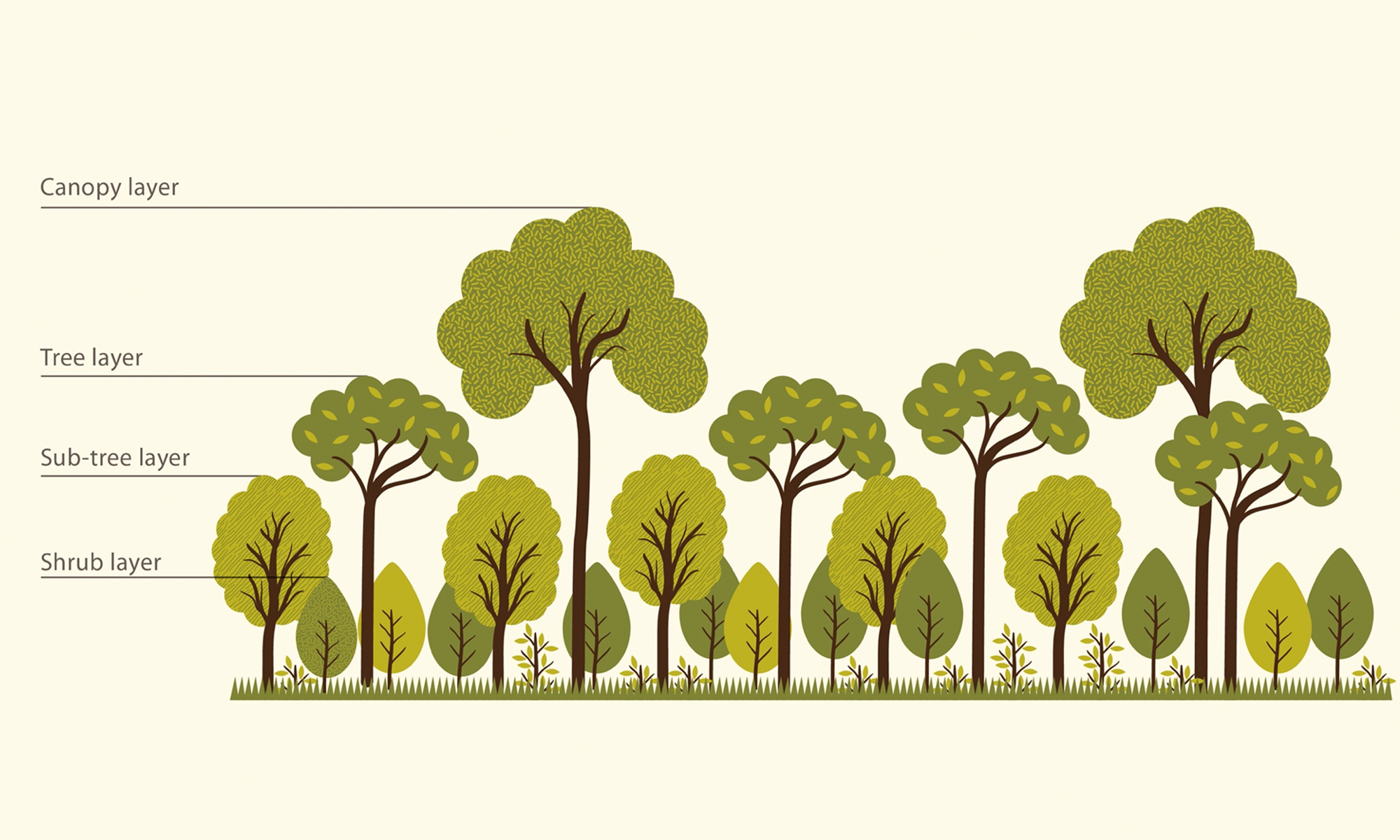 Although un (1991) figures indicate that in 1990. How To Grow Your Own Tiny Forest