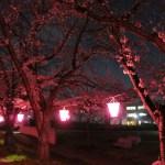 WR250Xと行く「桜ライトアップイベント、第8回武庫川さくらと灯りのプロムナード」
