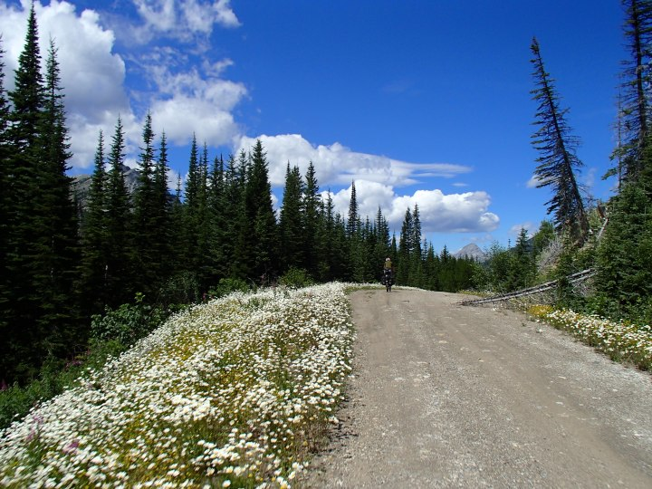 The route is framed in flowers