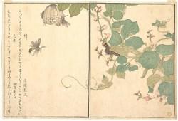 Utamaro: Bee and Caterpillar