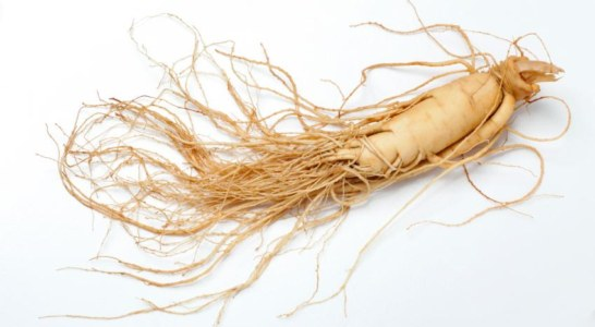U.S. Forest Service Announces Ginseng Permit Process for 2017