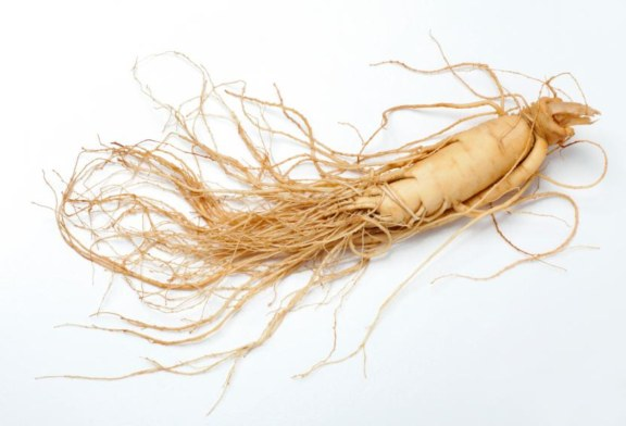 Forest Service Announces Ginseng Permit Process for 2016