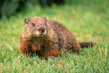 Hotel Rates in Punxsutawney For Groundhog Day Are Higher Than Rates in Houston For the Super Bowl