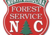 Drought in Western N.C. leaves pines more susceptible to attacks