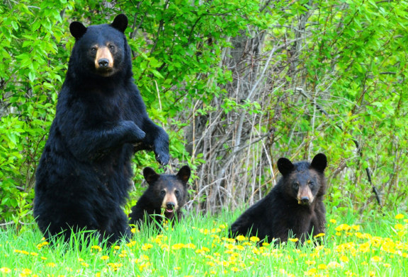 Wildlife Commission Moves to Real-Time Reporting of Big Game Harvests