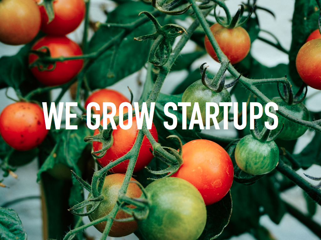 We Grow Startups