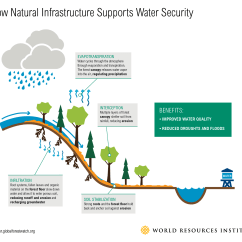 Forest Canopy Diagram Air Conditioner Wiring Watersheds Lost Up To 22 Of Their Forests In 14 Years Here S How Yet The World 6 Percent Tree Cover On Average From 2000 2014 Putting Citizens At Risk Losing Water Supplies
