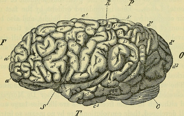 Image, Picture of a brain from an old medical textbook.