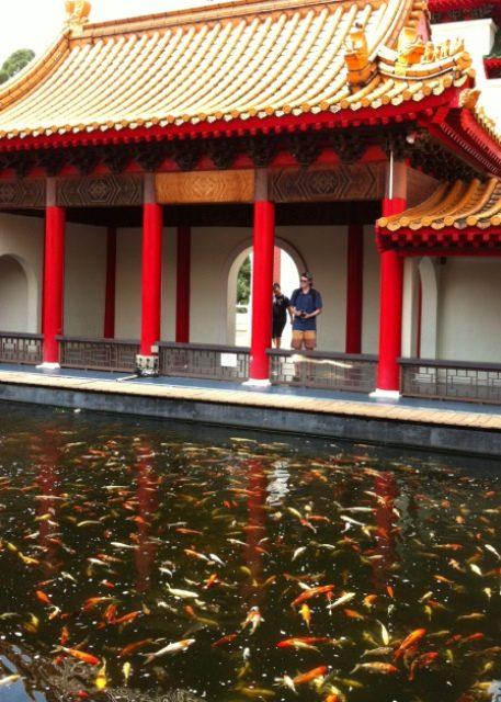 Image: Koi carp in pond at Chinese Garden, Singapore.