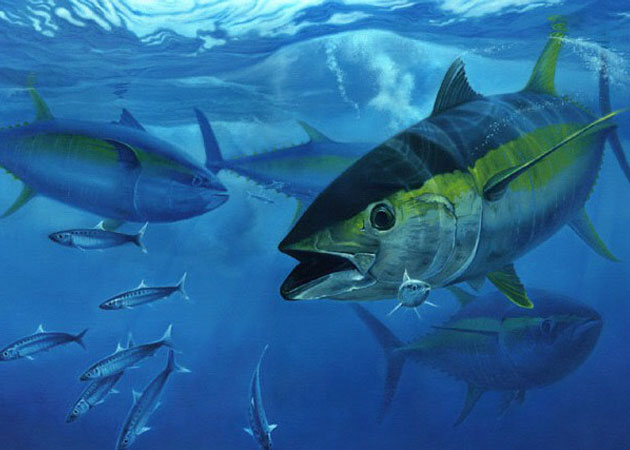 Photo of school of tuna fish.