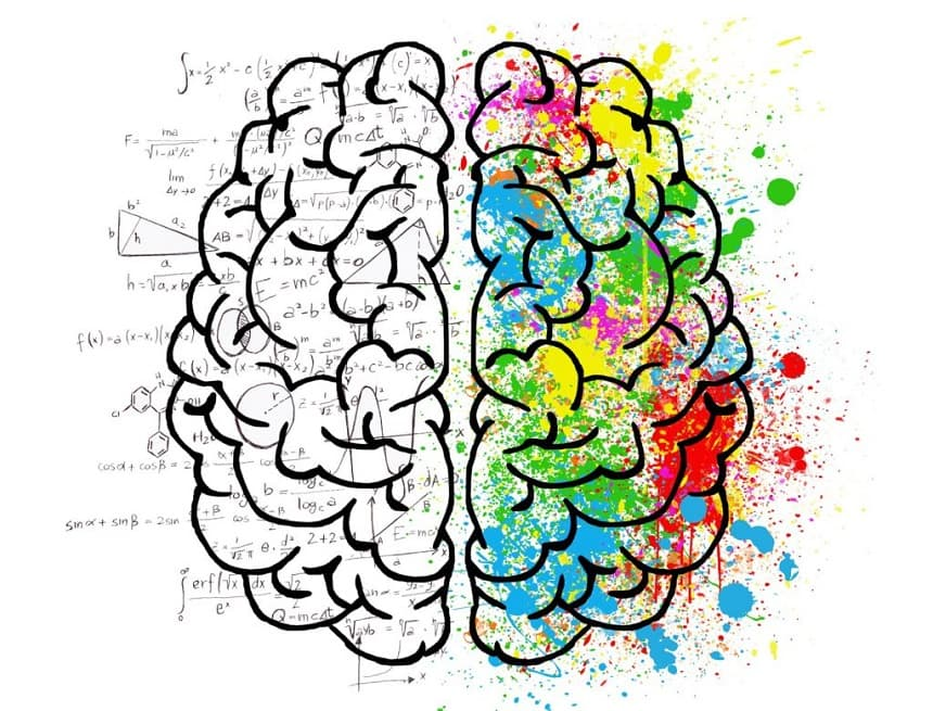 Image, Drawing of a brain, showing the 'analytical side' and the 'creative side'.
