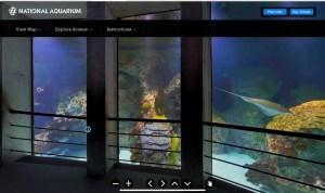 National Aquarium Live Webcam