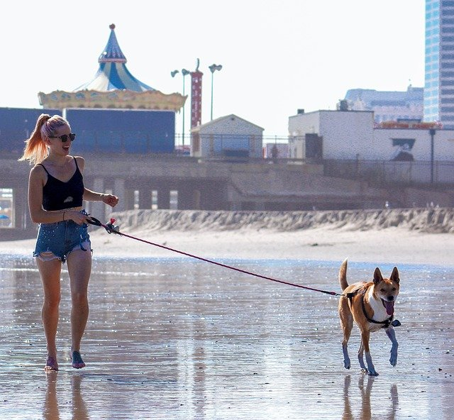 Make extra money walking dogs