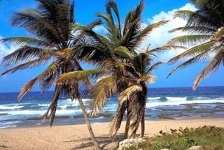 Palm trees on beach wb023058