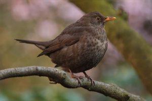bird-741174_1280