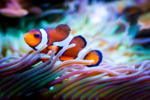 fish-959636_1280