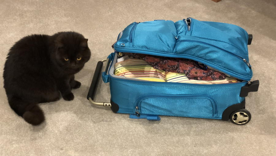 Cat looking forlorn beside a packed suitcase.