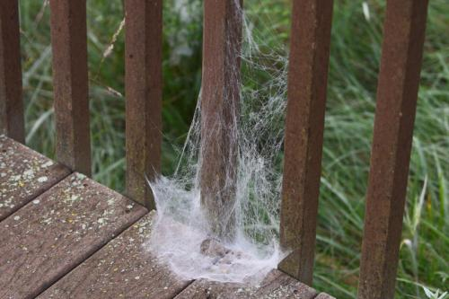 Deck post wrapped in spider's web, photo by Brian Henderson