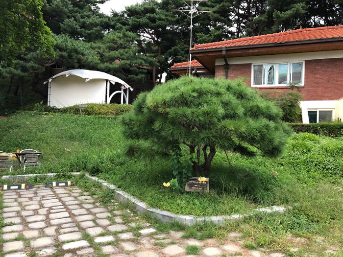 Cobbled carpark and small pine tree marking the foundation of Seoul Art Space-Yeonhui in 2009