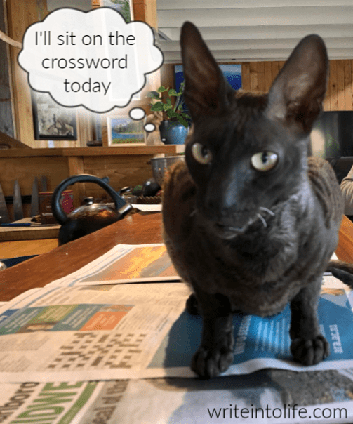 A strange black cat hesitates over an open newspaper.