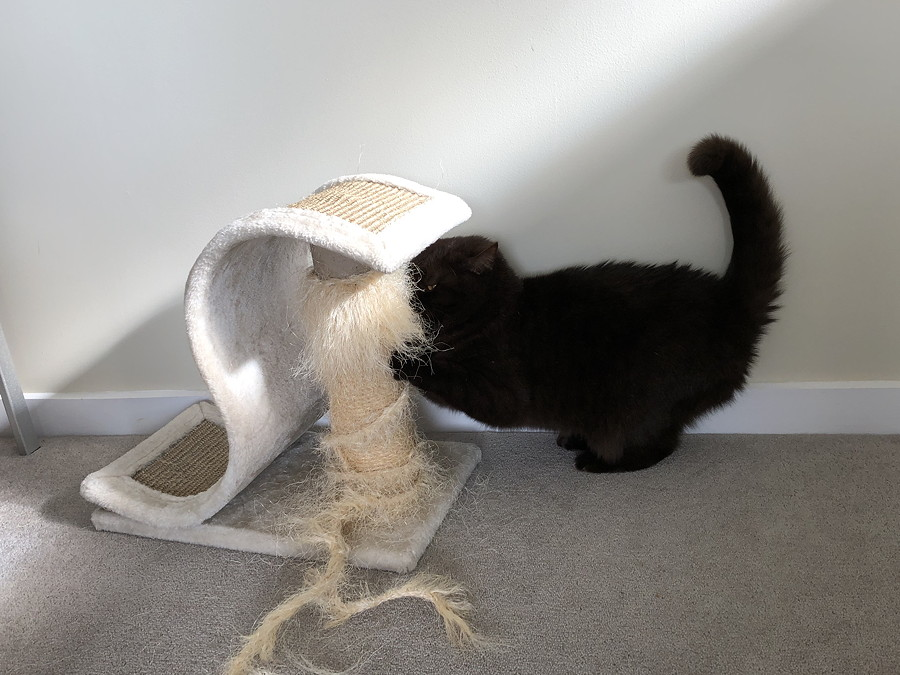 Cat scratching at a string cat tower