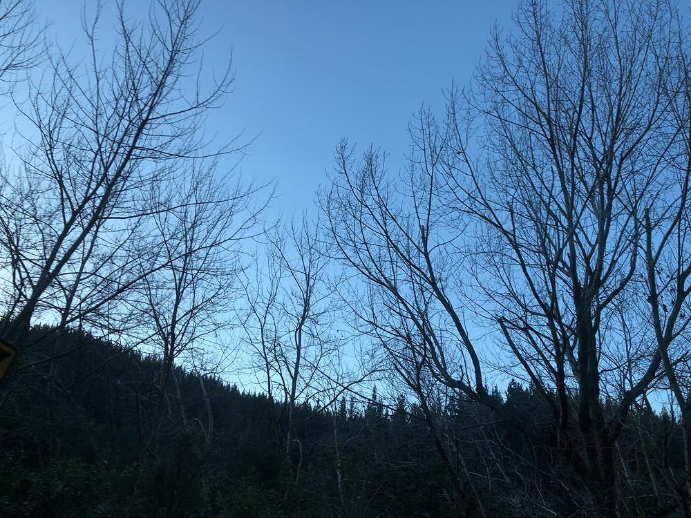 Twilight sky and skeleton trees