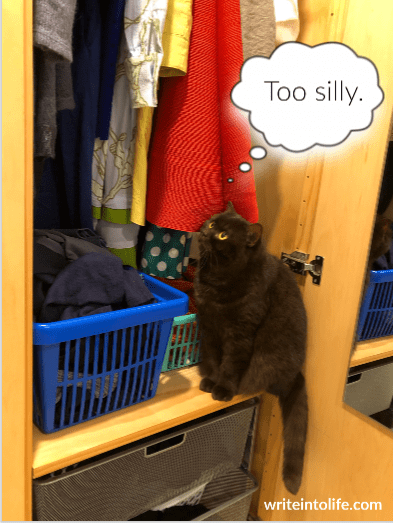 Cat gazing at clothes in a wardrobe and thinks, Too silly.