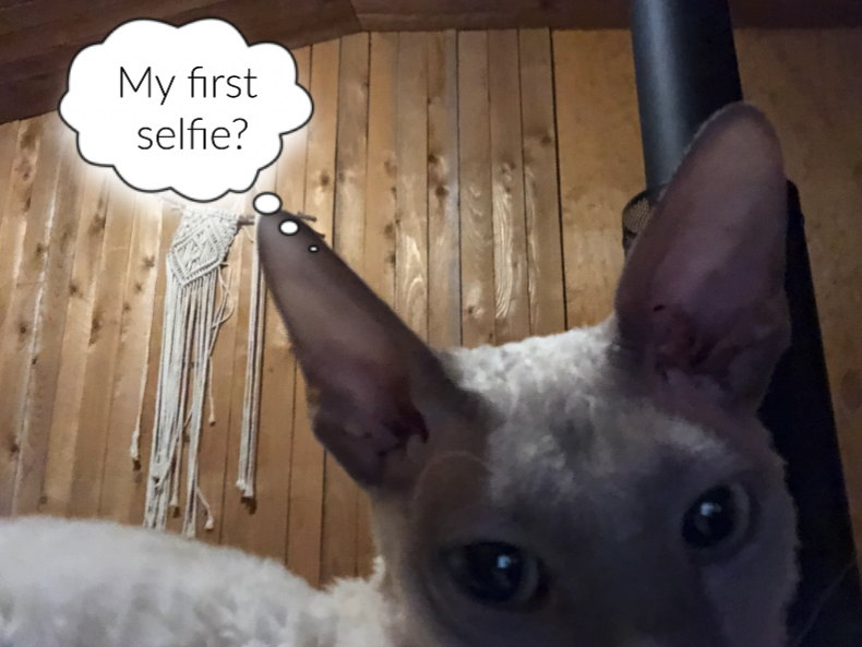 Cornish Rex takes his first selfie